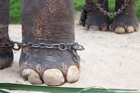elephants tourism travel animal abuse