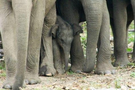 baby elephant india kerala wayanad wild